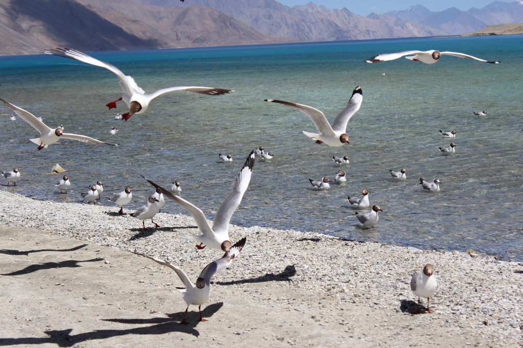 Lakes of Ladakh: Published in WKND Khaleej Times
