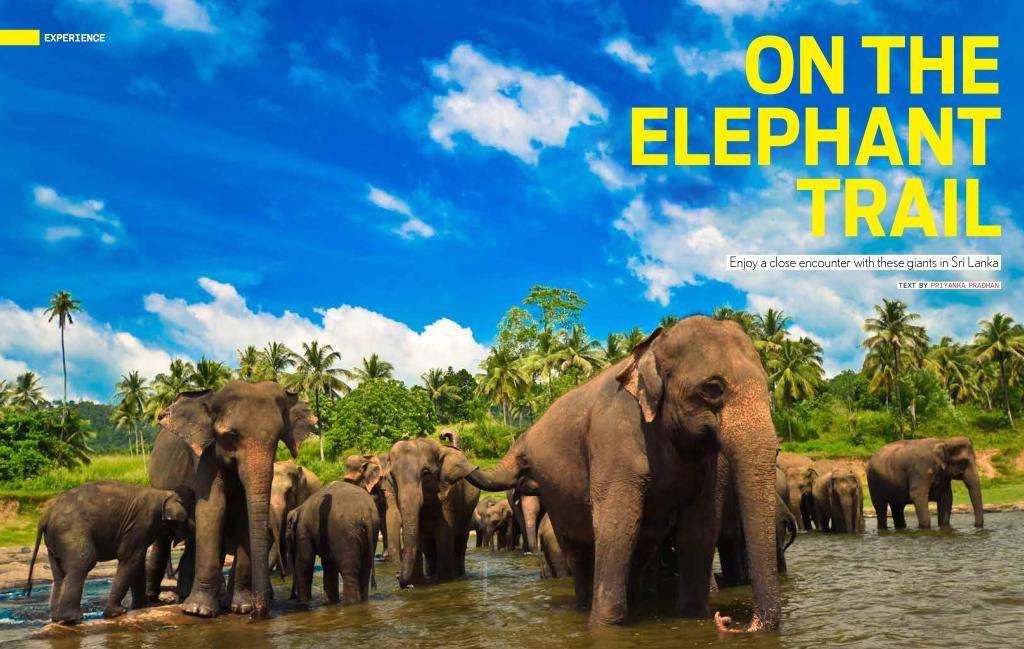Elephant-page-001